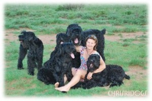 Chrisna and her stunning Black Russian Terriers