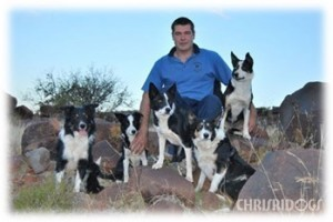 Christoff and his team of Border Collies