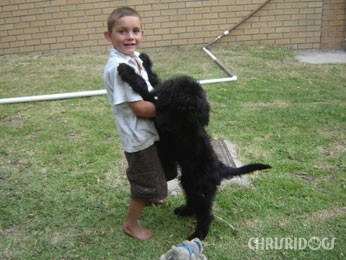 Diva Adopted Black Russian Terrier Puppy